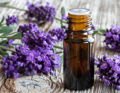 lavender plants with essential oil bottle sitting on wooden table