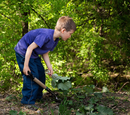 young boy wearing jeans and blue t-shirt clearing weeds from garden bed