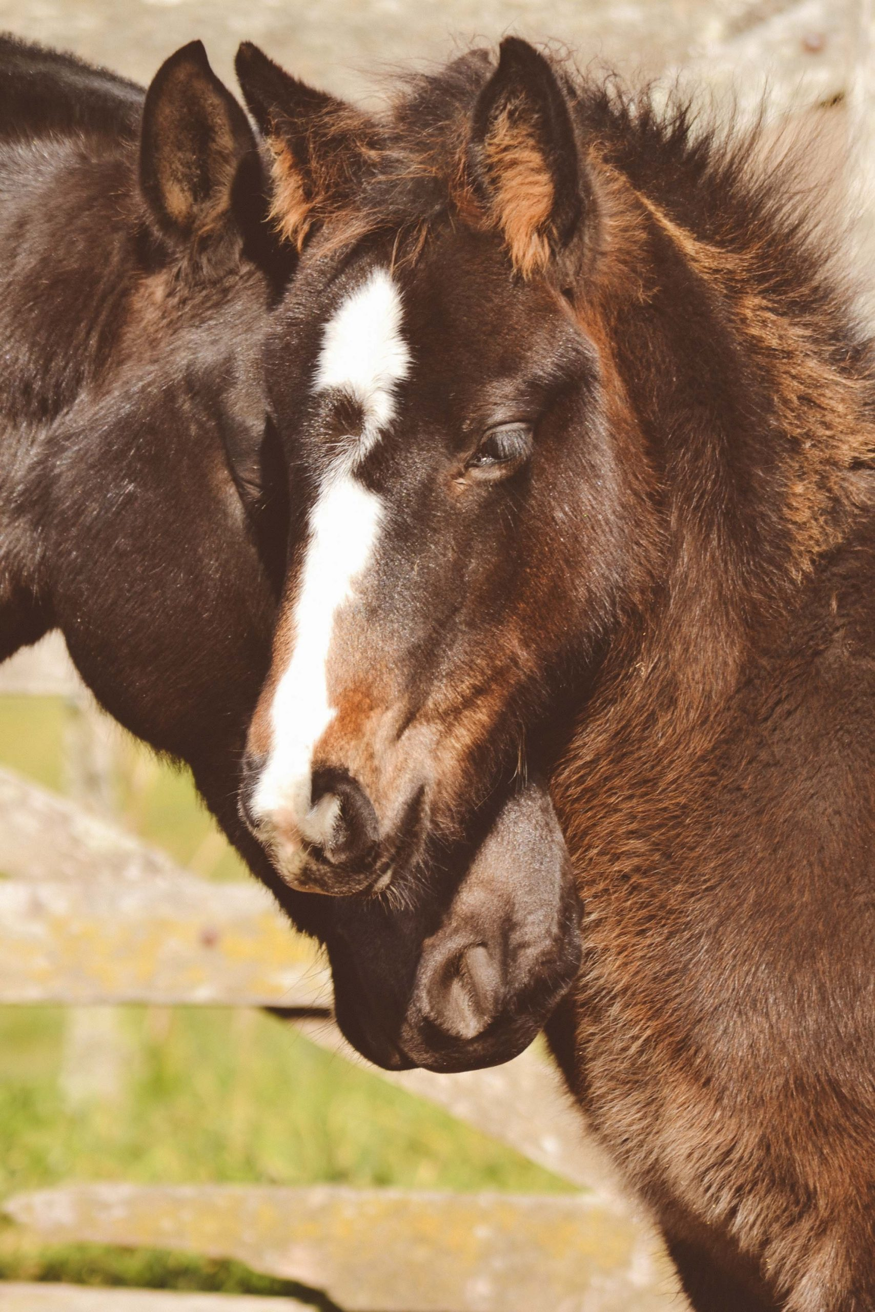 two horses stand close heads together